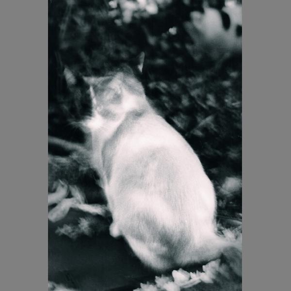 Chat beauté