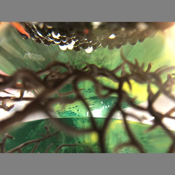 La vue de l'aquarium
